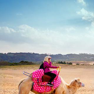 일본의 사하라 사막, '돗토리 사구'에서 낙타 타기