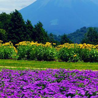 사계절 내내 만발하는 '돗토리 꽃의 회랑'에서 스냅 사진 찍기
