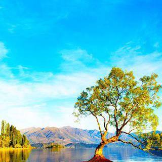 계절마다 바뀌는 풍경, '와나카 호수'에서 나무 사진 찍기
