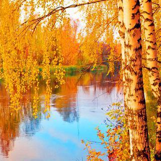 꽃잎같은 자작나무 단풍, '모스크바'에서 공원 산책하기