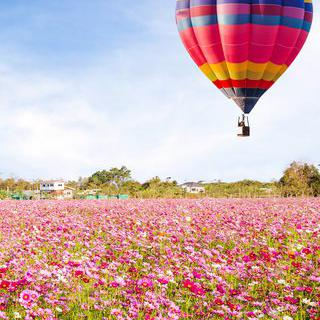 로맨틱한 분홍빛 비행, '싱하파크 치앙라이'에서 열기구 축제 즐기기