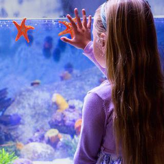 오감으로 체험하는 바다, 'Aquarium of Lyon'에서 불가사리 만져보기