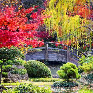 다채로운 테마 가든, '포트워스 식물원'에서 일본식 정원 구경하기
