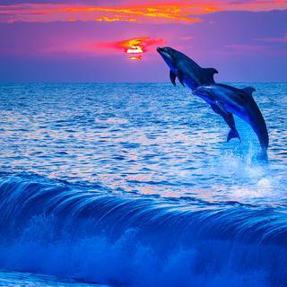 화산섬의 비경, '로보스 섬'에서 야생 돌고래 만나기