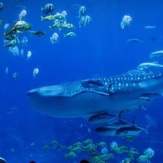 홍해의 죠스 테마파크, '후루가다 그랑 수족관'에서 상어 만나기