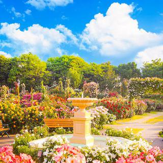 알록달록 장미 테마파크, 'Keisei Rose Garden' 탐방하기