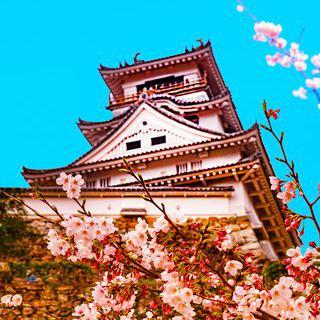 사백 년 역사의 고성, '고치성'에서 벚꽃 감상하기