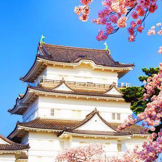 일본 전국 시대의 요새, '오다와라 성'에서 벚꽃 감상하기