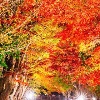 울긋불긋한 가을의 향기, '단풍회랑'에서 단풍 축제 즐기기