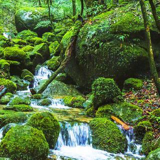 영화 <원령 공주>의 모티브, 'Shiratani Unsui Gorge'에서 하이킹하기