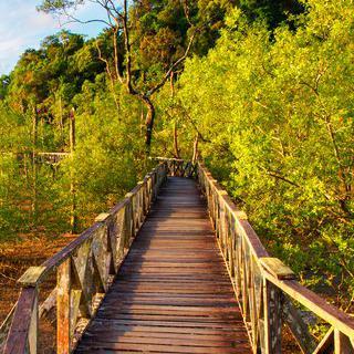 사라왁의 가장 오래된 국립 공원, 'Bako National Park' 탐방하기