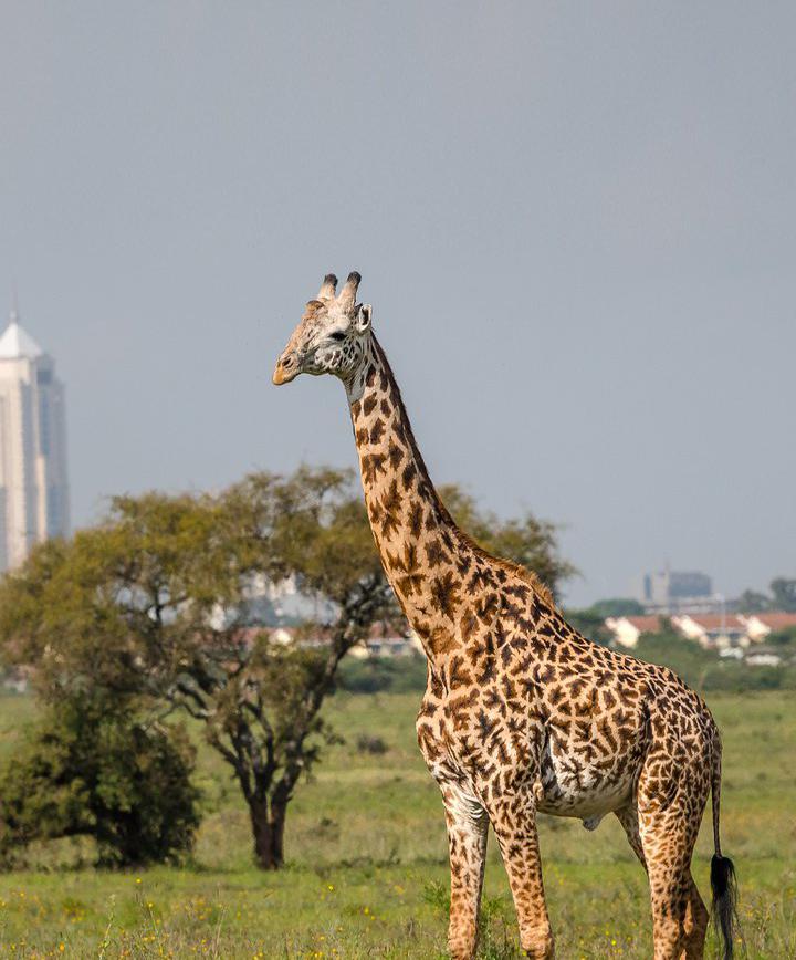 나이로비, 케냐 프로필 이미지