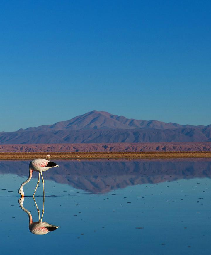 산 페드로 데 아타카마, 칠레 프로필 이미지