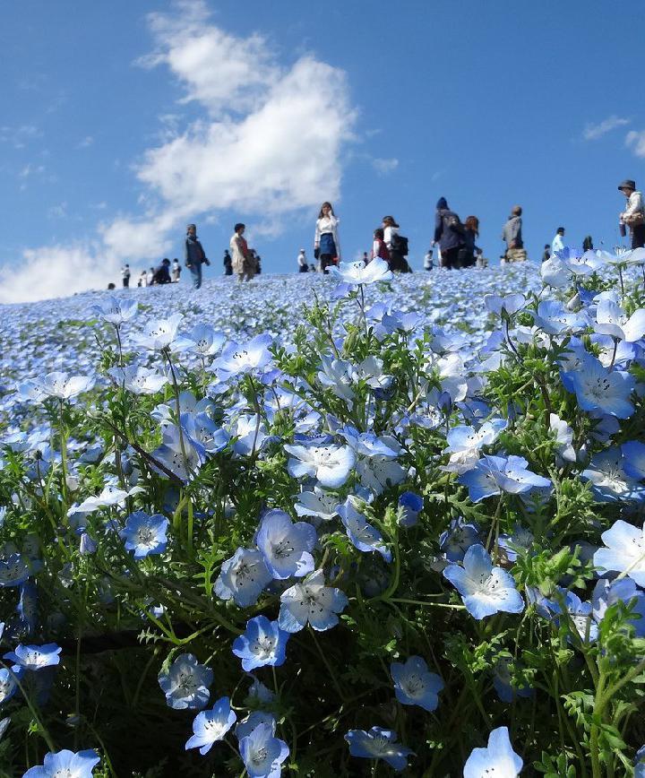 지바, 일본 프로필 이미지