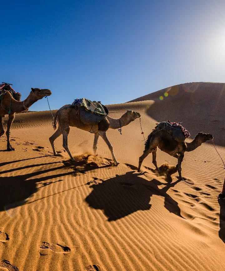 마라케시, 모로코 프로필 이미지