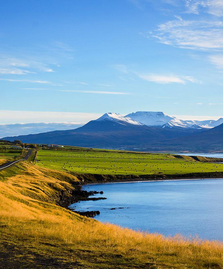 아퀴레이리, 아이슬란드 프로필 이미지