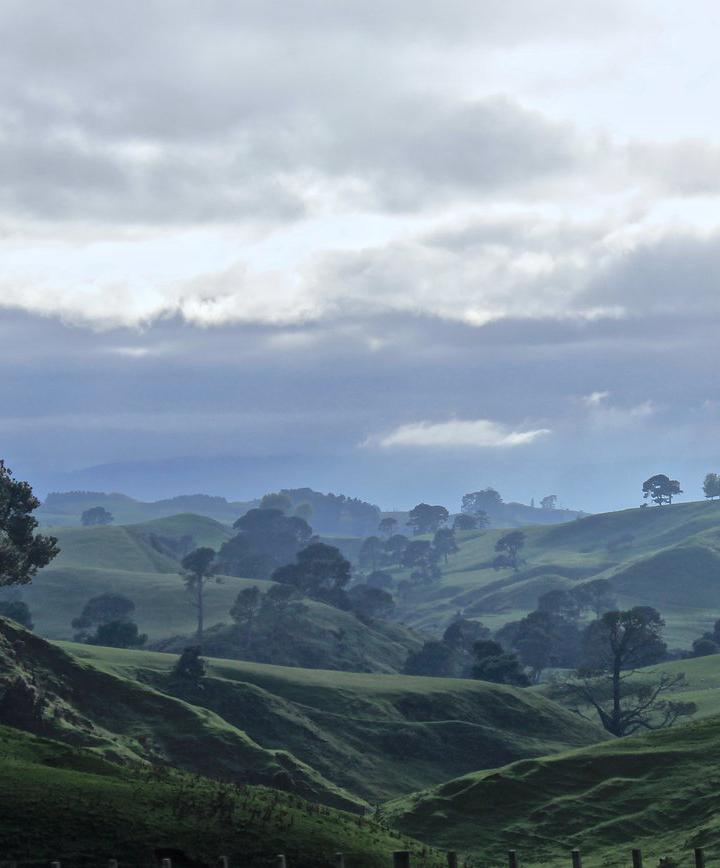 마타마타, 뉴질랜드 프로필 이미지